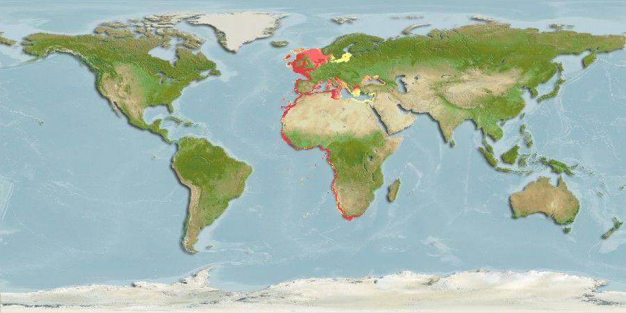 Mapa_distribucion_Engraulis_encrasicolus